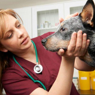 Thuốc mê cho chó – Những điều cần biết dành cho người nuôi chó