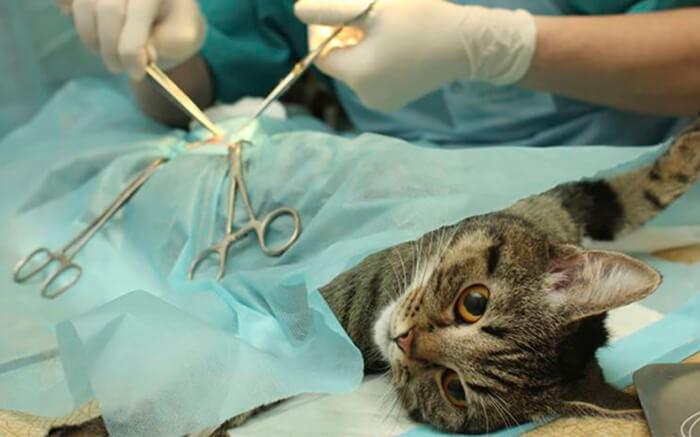 thuốc mê cho mèo 1