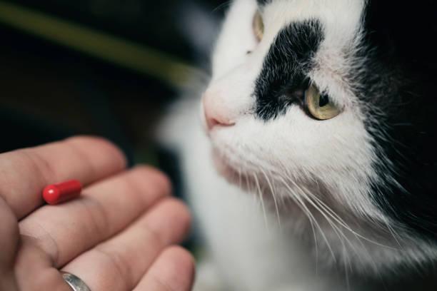 thuốc mê cho mèo 3