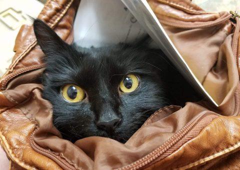 Những lưu ý mà bạn cần biết về thuốc mê cho mèo, sử dụng đúng cách