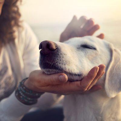 Thuốc mê cho thú y – Có gì khác biệt so với loại sử dụng cho người