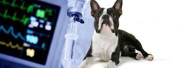 thuốc mê hà giang dùng cho thú y