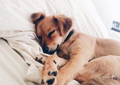 Các thông tin quan trọng cần biết về thuốc ngủ thú y cho chó, mèo