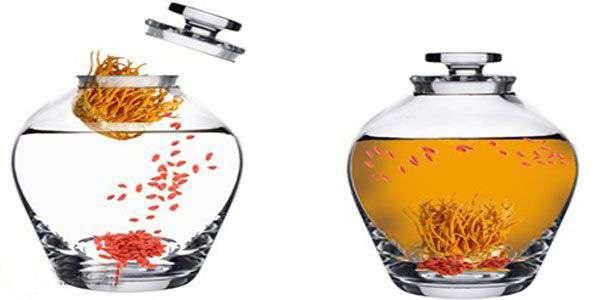 cách làm thuốc kích dục nam tại nhà - rượu đông trùng hạ thảo
